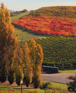Fall_in_Napa_Valley_new