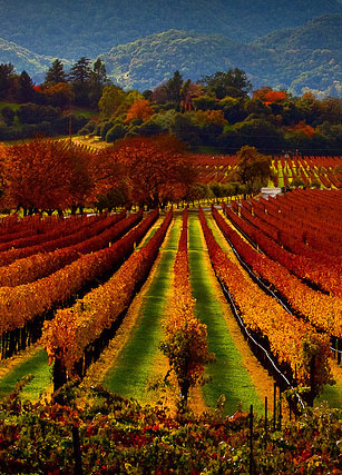 One Day Napa and Sonoma
